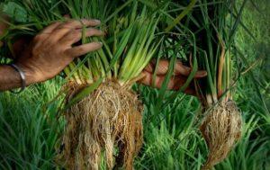 5 Contoh Peluang Bisnis Pertanian Yang Menjanjikan