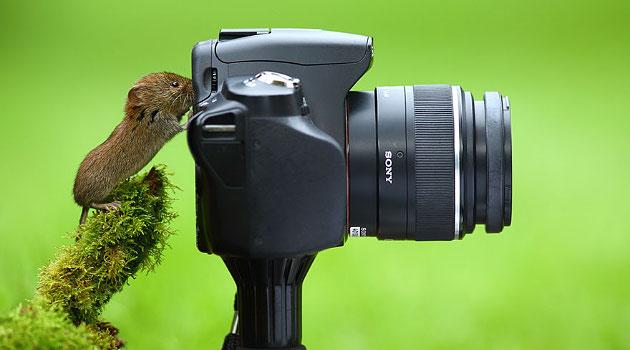 Jadi Fotografer